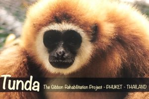 Qlick adopteerde Tunda, het gibbon-aapje